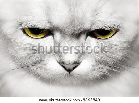 portrait of beautiful cat closeup - stock photo