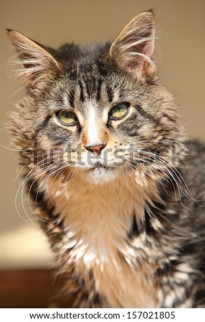 Portrait of beautiful cat sitting and looking at you - stock photo