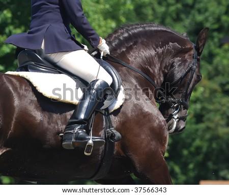 portrait of beautiful frisian dressage horse in motion - stock photo