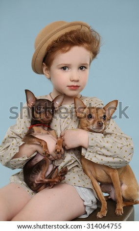 Portrait of beautiful girl, two little dogs on the hands. Blue background. Studio shot   - stock photo