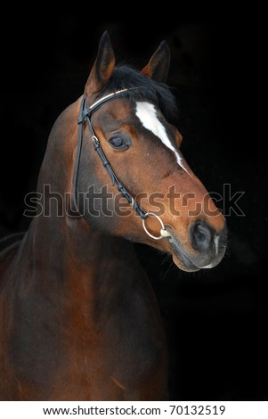 portrait of beautiful horse on dark background - stock photo
