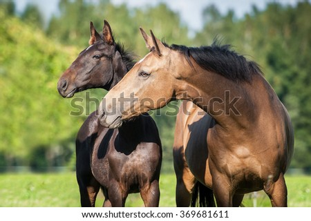 Portrait of beautiful mare with a foal in summer - stock photo