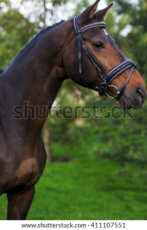Portrait of beautiful red horse in summer against greens