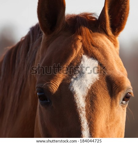 Portrait of beautiful Russian Don horse, closeup shot