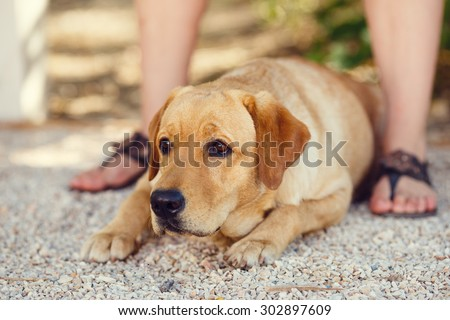 portrait of Beautiful young girl with her dog labrador retriever outdoor in summer beautiful park  - stock photo