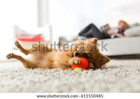 Portrait of beautiful young woman with her dog playing with ball at home.