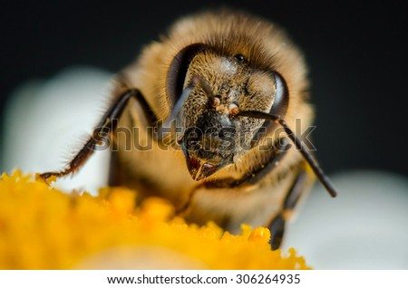Portrait of bee. Russian nature