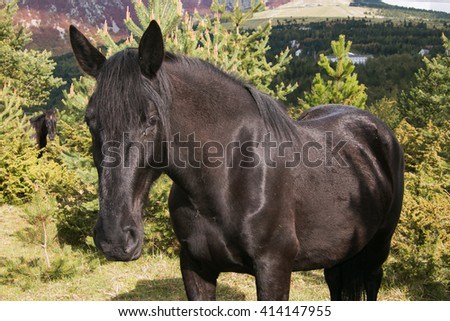 Portrait of black horse in the park. - stock photo