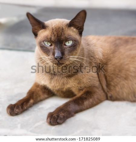 Portrait of brown cat