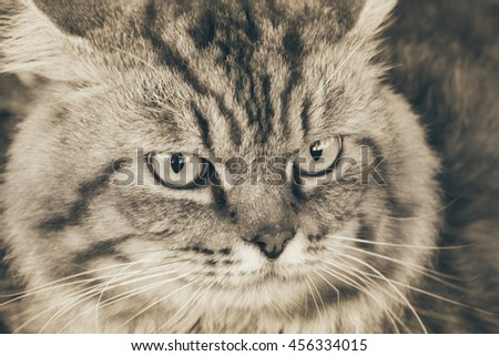 Portrait of brown-eyed cat