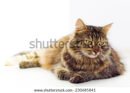 Portrait of brown-eyed cat isolated on white background - stock photo