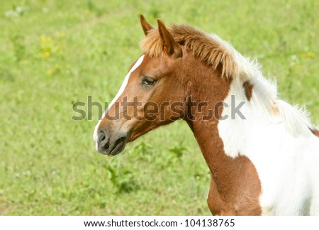 Portrait of brown horse against grass background