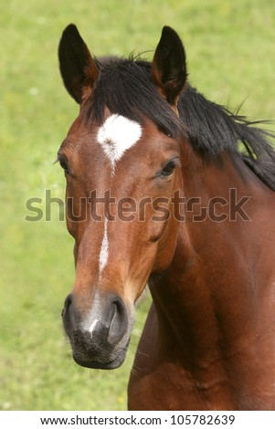 Portrait of brown horse against grass background - stock photo