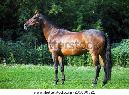 Portrait of brown horse in sunny field - stock photo