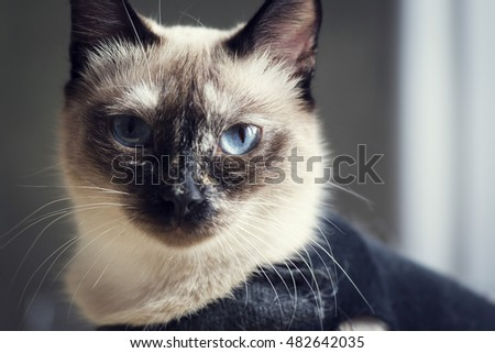 Portrait of cat