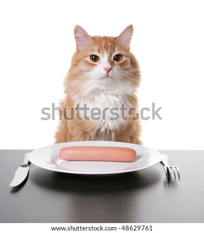 portrait of cat and hot dog - stock photo