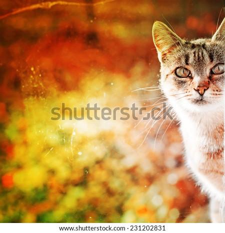 Portrait of cat e against beautiful autumn nature blure landscape - stock photo