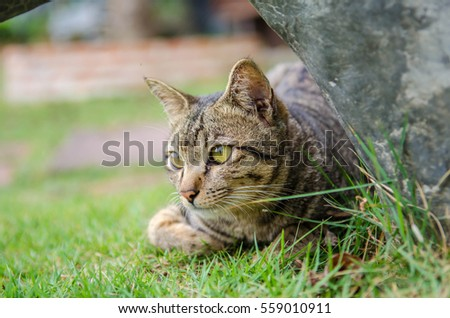 Portrait of  cat in garden