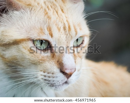 Portrait of cat, Selective focus and close up