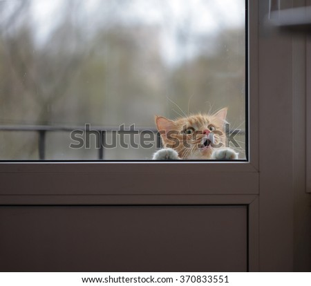 portrait of cat wants to the house, sad eyes look - stock photo