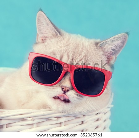 Portrait of cat wearing sunglasses - stock photo
