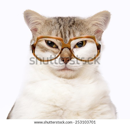 portrait of cat with glasses isolated on white - stock photo