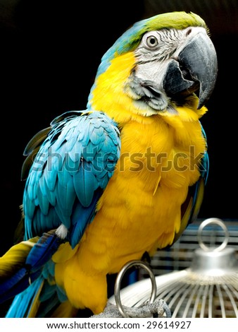 Portrait of colorful parrot sitting on the cage