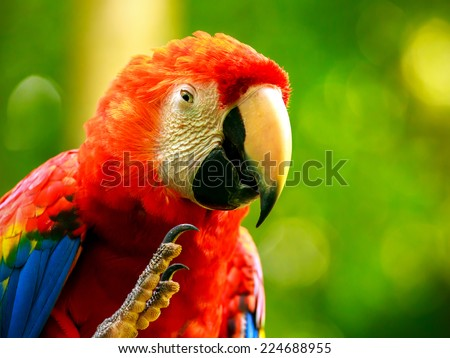 Portrait of colorful Scarlet Macaw parrot in Mexico