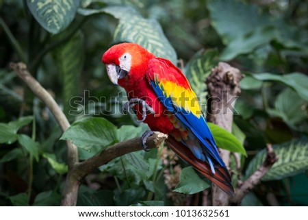 Portrait of colorful scarlet macaw parrot stand on timber in the zoo