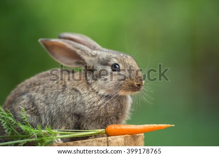 Portrait of cute baby rabbit bunny on stud whith carrot agaist green bokeh background - stock photo