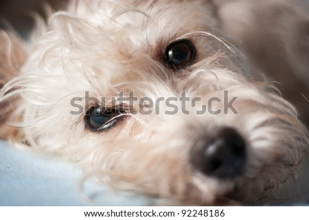 Portrait of cute crossbreed white dog - stock photo