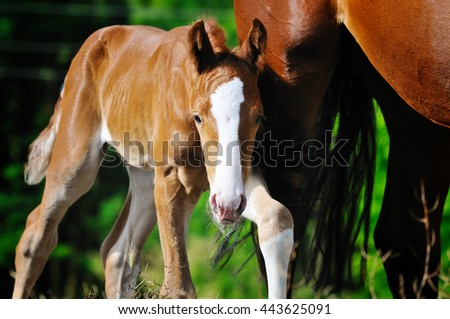 Portrait of cute foal near his mother - stock photo