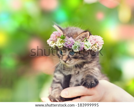 Portrait of cute kitten crowned with a chaplet of clover - stock photo