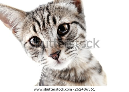 Portrait of cute kitten isolated on white - stock photo