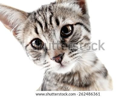 Portrait of cute kitten isolated on white - stock photo