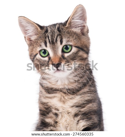 Portrait of cute kitten over white background close-up