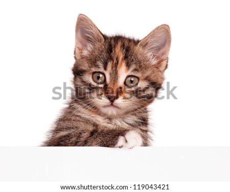 Portrait of cute little kitten with empty board is looking straight into camera on white background - stock photo