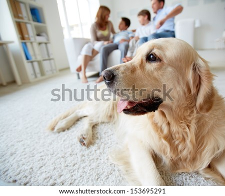 Portrait of cute pet lying on the floor on background of family of four having rest at home - stock photo