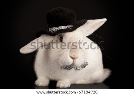 Portrait of cute rabbit in top hat and bow-tie. Isolated on dark background - stock photo