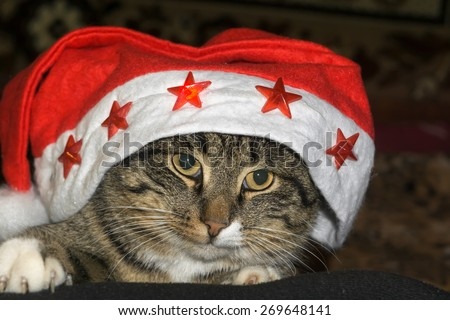 Portrait of cute tabby cat posing, close up view. - stock photo