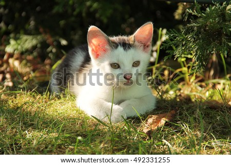 portrait of cute white kitten with pink ears lying in the grass