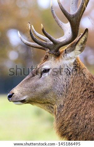 Portrait of deer stag in forest landscape