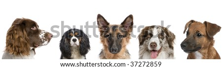 Portrait of different breeds of dogs against white background, studio shot - stock photo