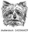 portrait of dog - stock photo