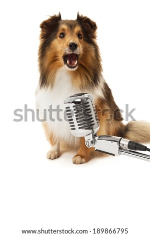 Portrait of dog in front of vintage microphone isolated over white background - stock photo