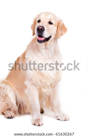 portrait of dog isolated on white - stock photo