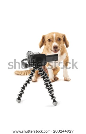Portrait of dog looking at camcorder on tripod isolated over white background - stock photo