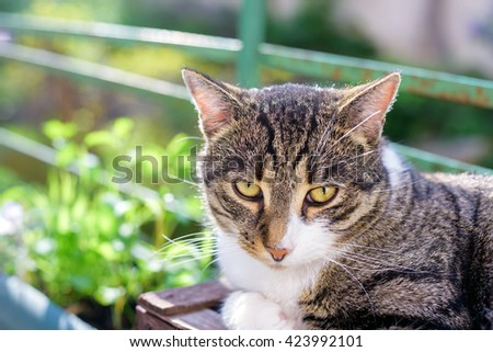 portrait of domestic tabby cat on terrace in sunlight
