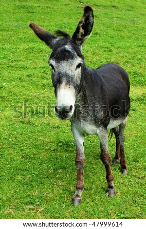 Portrait of  donkey on a green grass
