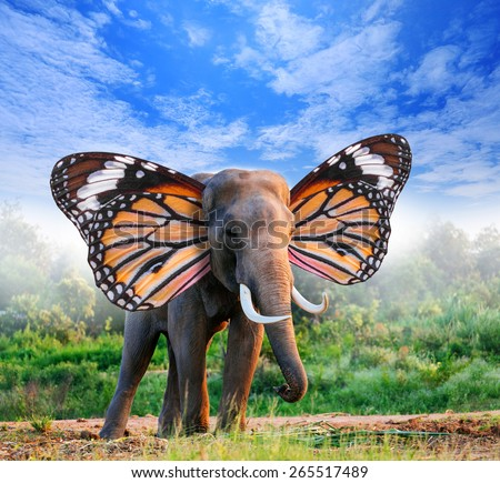portrait of elephant with butterfly wings in forest  - stock photo